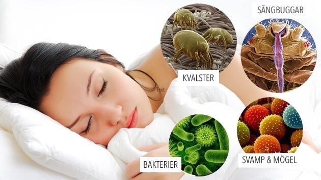 Bakterier, svamp & mögel, sängbuggar, kvalster